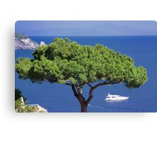 Single Tree Ocean View Canvas Print