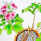 Pink Geraniums by marlene veronique holdsworth
