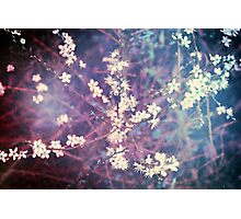 Wonderland Dreamy Blossom Tree Photographic Print
