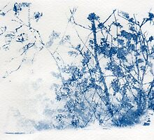 Blue Cyanotype Trees by kimwatson
