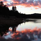 Last Light by Christine Ford