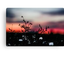Seattle Cotton (small town) Canvas Print