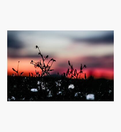 Seattle Cotton (small town) Photographic Print