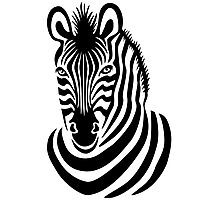 Smiling Zebra Photographic Print