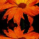 Orange Flower Reflection by Tori Snow