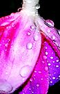 Fuchsia  by Tori Snow