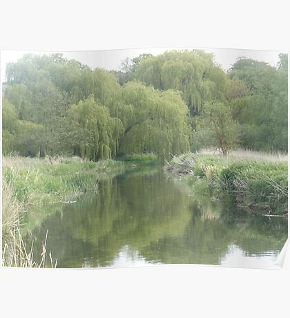 River with willow trees Poster