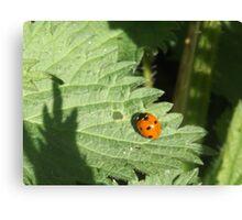 The ladybird Canvas Print