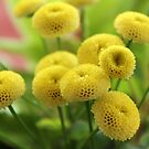 Yellow Flower Balls by karina5