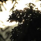 Trees silhouette by treolson