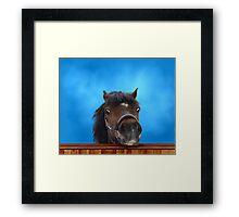 Pony, cheeky head study. Framed Print