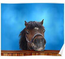 Pony, cheeky head study. Poster