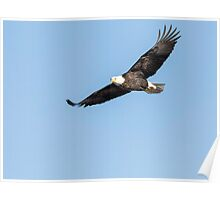 The Great American Bald Eagle 2016-5 Poster