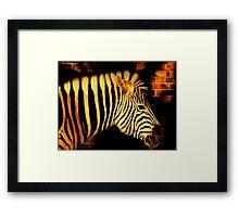 Low Light Zebra Framed Print