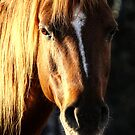 Golden Horse Portrait Photo by Val  Brackenridge