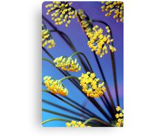 Fennel flowers Canvas Print