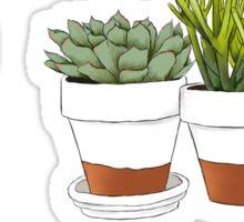 Succulent Cactus Print Sticker