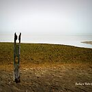 Solitary by Barbara Gerstner