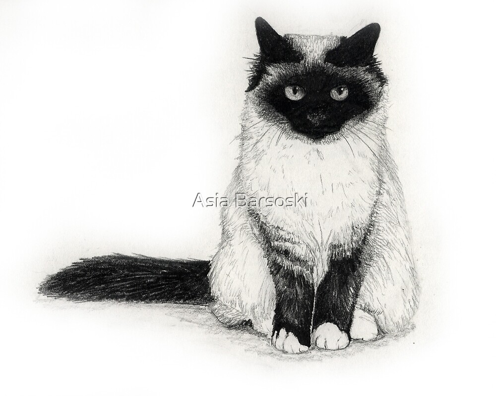 Birman by Asia Barsoski