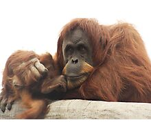 Orangutan with baby Photographic Print