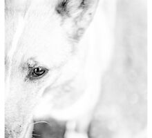 Fuzzy by willlesphoto