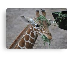 Feeding Time Canvas Print
