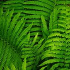 FERN by goddarb