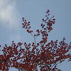 Copper Beech Against a Summer Sky by Leyh