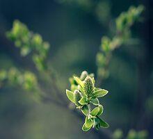 Cryo Green by Matti Ollikainen