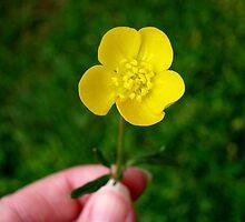 Buttercup by lorraineyork