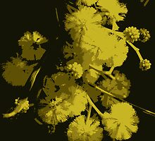 Wattle  by magnifolia