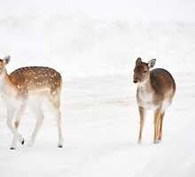 Let's go home, oh! deer, it's a white out!!! by Poete100
