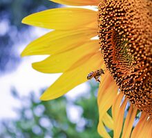 Sunflower and Bee by AarKDesigns