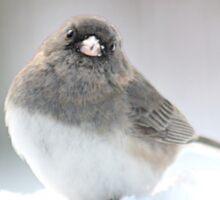 Adorable snow bird in his element Sticker