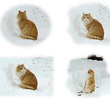 Meerly Max The Marvelous Cat by MotherNature