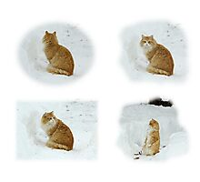 Meerly Max The Marvelous Cat Photographic Print