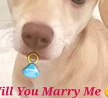 Honey holding an engagement ring proposing Sticker