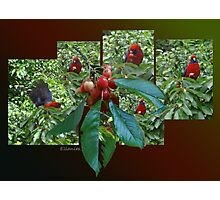 The Cherry Thief Photographic Print