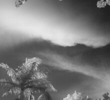 Palm Clouds by Pierre