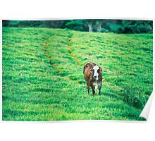 Cow in the country Poster