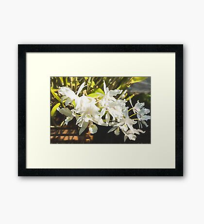 Tropical Impressions - Dreamy White Orchids Framed Print