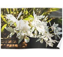Tropical Impressions - Dreamy White Orchids Poster