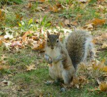 Central Park Squirrel Sticker