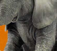 VW Elephant Sticker