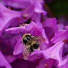 Busy Busy Bumble by © Loree McComb