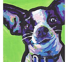 Chihuahua Dog Bright colorful pop dog art Photographic Print