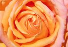 Heart of A Rose by LoneAngel