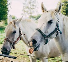 White Horses by PatiDesigns