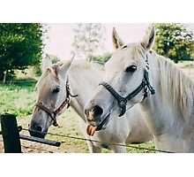 White Horses Photographic Print