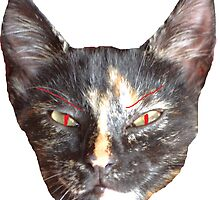 EVIL CAT by Jordan Williams